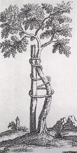 整形外科学's relation image