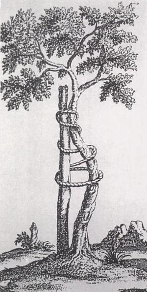 Nicolas Andry - Frontispiece of Orthopaedia