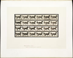 Animal locomotion. Plate 609 (Boston Public Library).jpg
