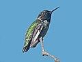 Annas Hummingbird RWD.jpg