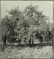 Annual report of the Fruit Growers' Association of Ontario, 1908 (1909) (18743708303).jpg