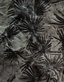 Annularia stellata fossil cropped.png