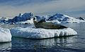 Antarctica (39985469).jpg