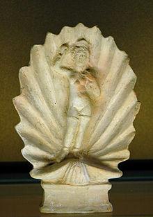 Seashell Wikipedia