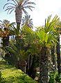 Arboretum Trsteno 05.jpg