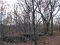 Archbald Pothole State Park - Pennsylvania1.jpg