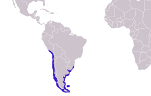 South American fur seal - Image: Arctocephalus australis distribution