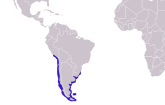 South American fur seal - Image: Arctocephalus australis distribution