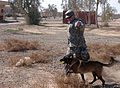 Army Training, For the Dogs DVIDS151313.jpg