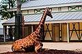 Artiszoo giraffe.jpg