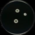 Aspergillus furus cya.png