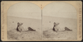Atlantic City -- A Beach Study, from Robert N. Dennis collection of stereoscopic views.png