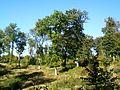 Aumont-en-Halatte (60), forêt d'Halatte, chemin de la Gruerie.jpg
