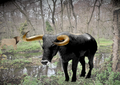 Aurochs and modern lion reconstruction - Greece during the Roman period.png