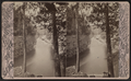 Ausable Chasm. Rapids below the Pool, by G. W. Baldwin.png