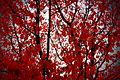 Autumn Impressions 2 (23638764569).jpg