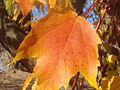Autumn Leaf 10-26-2014.JPG