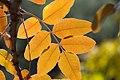 Autumn Leaves in Superior, Arizona.jpg