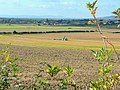 Autumn cultivations - geograph.org.uk - 1545197.jpg