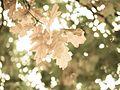 Autumn leaves (8105209497).jpg