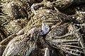 Avian influenza roee shpernik 02.jpg