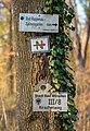 Bad Wimpfen - Bonfelder Wald - Wegzeichen und Markierungen an Eiche (1).jpg