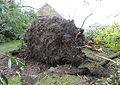 Bailleul - Dégâts causés par la tornade du 20 octobre 2013 (B36).JPG