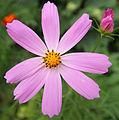 Bakhchisarai - flower.jpg