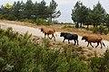 Baltar, Province of Ourense, Spain - panoramio (13).jpg
