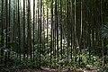 Bambouseraie de Prafrance 20100904 079.jpg