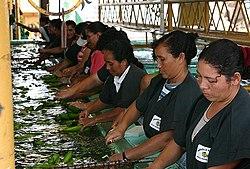 Despencamento de bananas por mulheres, no Belize.