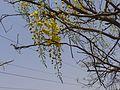 Bandaralathi (Bengali- বাঁদরলাঠি) (4520852828).jpg