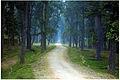 Bardiya National Park.jpg