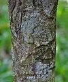Bark I IMG 9544.jpg