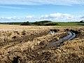 Barley Field - geograph.org.uk - 991524.jpg