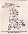Barnacles Page 246.jpg