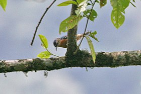 Beautiful Nuthatch 2.jpg