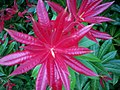 Beautiful Plant at Colby Lodge Woodland Gardens - geograph.org.uk - 1048527.jpg
