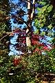 Bellevue Botanical Garden 06.jpg
