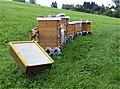 Berggasthof Haldenhof - Bienenstöcke (1).jpg