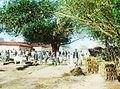 Bhithirwa (sic) village, Gopalganj, India, ca. 1915 (IMP-CSCNWW33-OS14-46).jpg