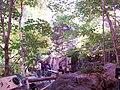 Biodôme de Montréal - Forêt laurentienne.jpg