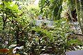 Biome tropical BM06.jpg