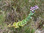 Black Point Wildlife Drive, Merritt Island FL - Flickr - Rusty Clark (223).jpg