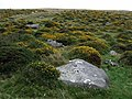 Block-field below Carn Sian - geograph.org.uk - 1447707.jpg