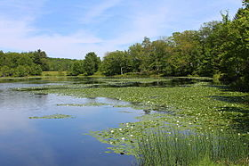 Blue Giant Meadow Lake 2.JPG