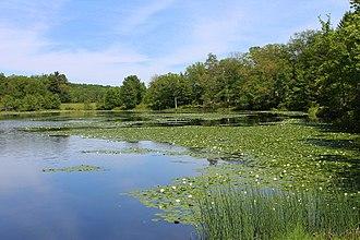 Mountain Top, Pennsylvania - Blue Giant Meadow Lake in Mountain Top