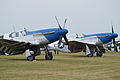 Blue Nosed Mustangs - 2013 Flying Legends (13961239618).jpg