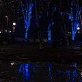 Blue Trees (11964817346).jpg