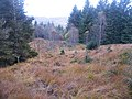 Boggy Path Descending down Towards Invergarry - geograph.org.uk - 1022745.jpg